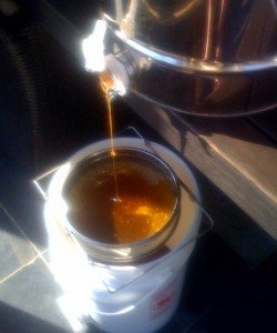 Honey flows from the centrifugal extractor